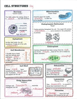 Cell Structure and Function Notes, Task Cards, Diagrams, Graphic Organizer
