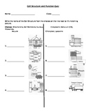 Cell Structure and Function Quiz Modified for IEP