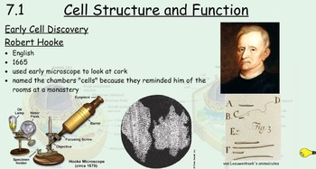Cell Structure and Function Sample
