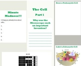 Cell Structure and Function Worksheet to Accompany The Cell Powerpoint Part 1