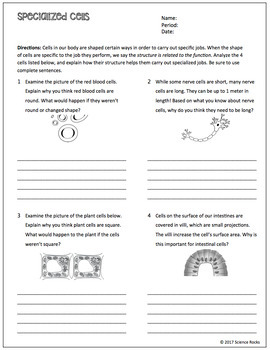 Cell Structure and Function Worksheets