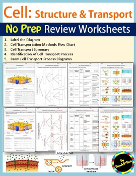 Cell Structure and Transport Review Worksheets | TpT