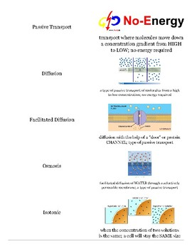 Cell Structure and function vocabulary cards