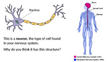 Cell Structure vs. Function Discussion
