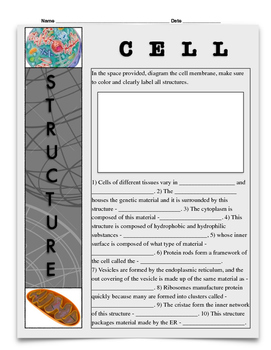 Cell Structure w/key