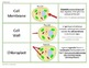 Cell Structures PowerPoint Teaching Pack