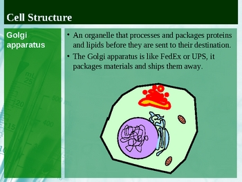 Cell Theory, Organelles and Membranes