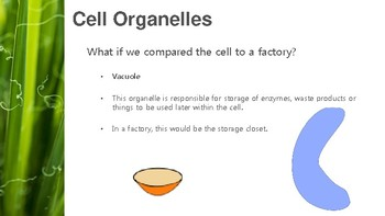 Cell Theory Presentation/The Cell is Like a Factory Presentation