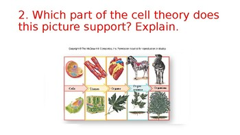 Cell Theory Stations