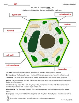 Cell, Tissues, Organs and Systems Grades 4-7