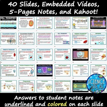 Cell Transport Across Cell Membranes PowerPoint, Notes, and Kahoot! Bundle