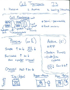 Cell Transport Anchor Chart