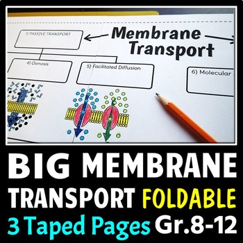 Cell Membrane Transport - Big Foldable for Interactive Not