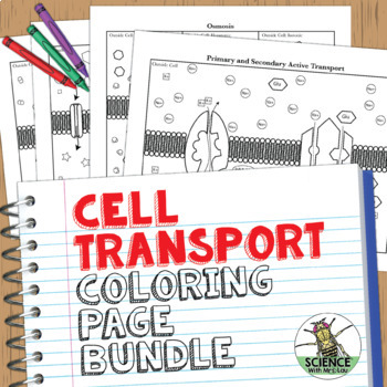 Cell Transport Coloring Activities: Osmosis Diffusion for High School Biology