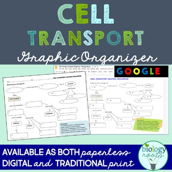 Cell Transport Graphic Organizer Teaching Resources Teachers Pay