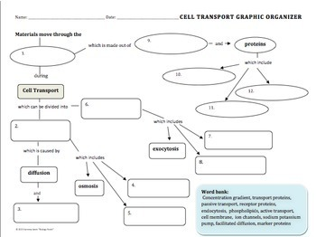 cell transport graphic organizer by biology roots tpt. Black Bedroom Furniture Sets. Home Design Ideas