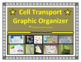 Cell / Cellular Transport Graphic Organizer (Study Guide)