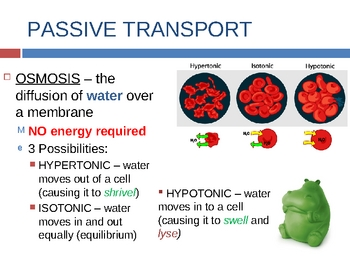 Cell Transport Powerpoint