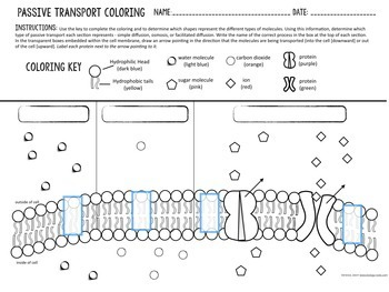 Cell Transport- Passive Transport Coloring by Biology Roots | TpT