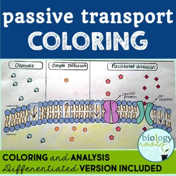 Cell Transport Passive Transport Coloring By Biology Roots Tpt