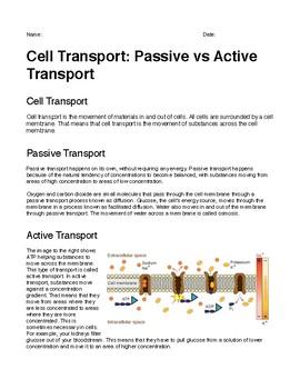 Cell Transport: Passive vs Active Transport