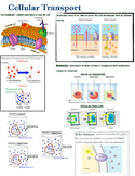 Cell Transport Poster