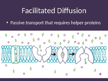 Cell Transport  & TonicityPowerPoint