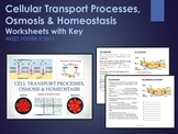 Cell Transport Processes, Osmosis and Homeostasis Bundle: PPt and WS