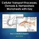 Cell Transport Processes,  Osmosis and Homeostasis Workshe