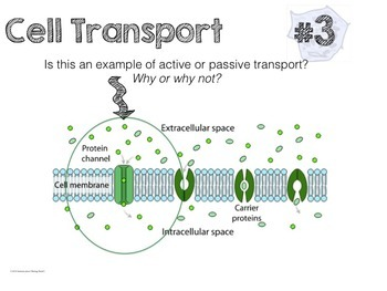 Cell Transport Task Cards