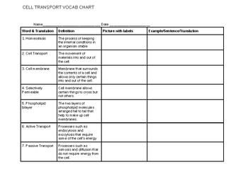 Cell Transport Vocabulary Chart