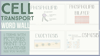 Cell Transport Word Wall Terms