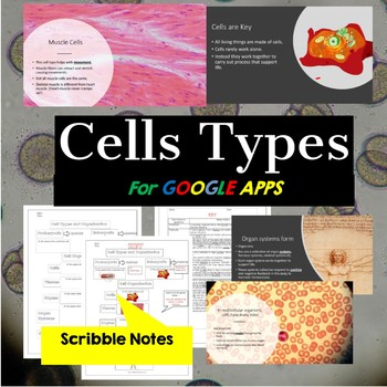 Cell Types:  Cells for Middle School Lesson 2