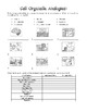 Cell Unit Study Guide