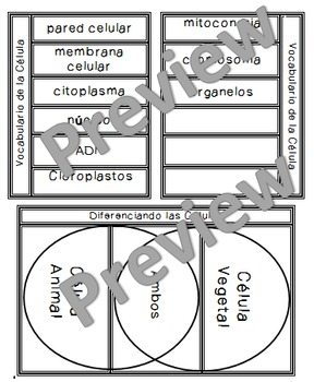 Cell Vocabulary and Differences Foldable in Spanish!