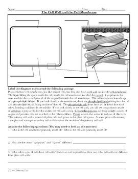 Cell Wall Diagram Coloring Page and Reading Page