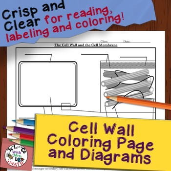 Cell Wall Diagram Coloring Page And Reading Page By Science With Mrs Lau