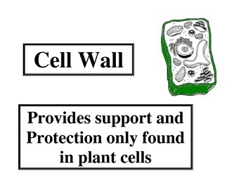 Cell Word Wall