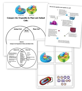 Cell Worksheets - Parts of Cell, Animal vs. Plant Cells, and More