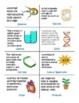 Cell and Cell Processes BINGO