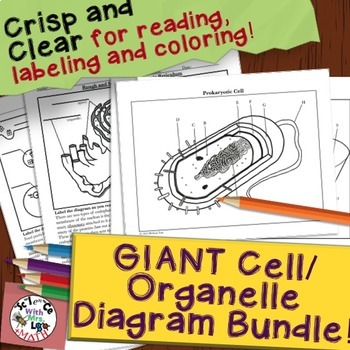 Cell and Organelle Coloring Page and Diagram Unit Bundle