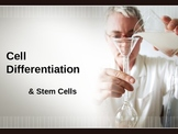 Cell differentiation & stem cell presentation