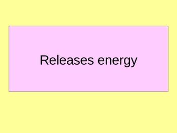 Cell-life processes bingo