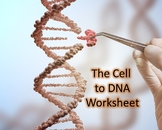 Cell to DNA Worksheet & ANSWER KEY