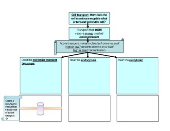 Cell transport graphic organizer