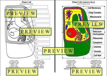 Cells #1 Plant Cell Coloring Worksheet with Questions & Answer Key