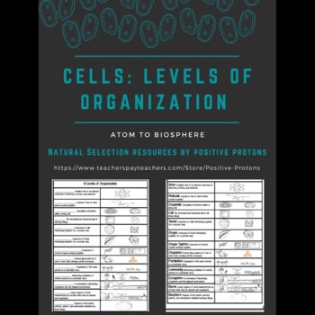 Cells: 13 Levels of Organization