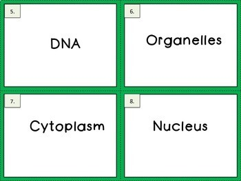 Cells Word Wall
