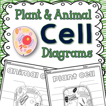 Plant and Animal Cells FREE