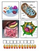 Cells 4 Pics one word vocabulary game